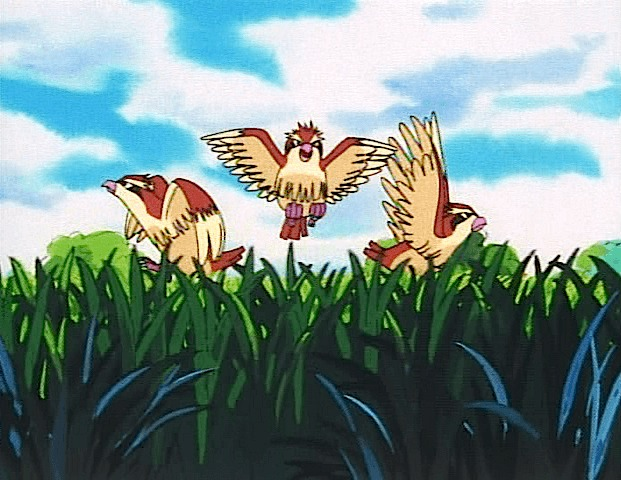 pidgey three grass